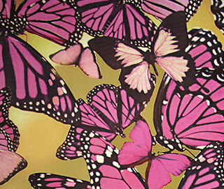 Butterflies Wall Covering