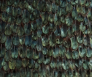 Iridescent Peacock Feathers WallCovering