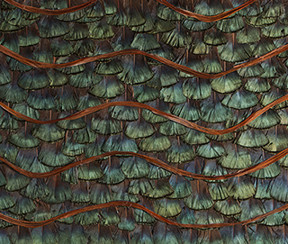 Peacock Organic Feathers WallCovering
