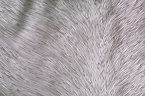 HIDE VELVET FROST Fabric by KOKET