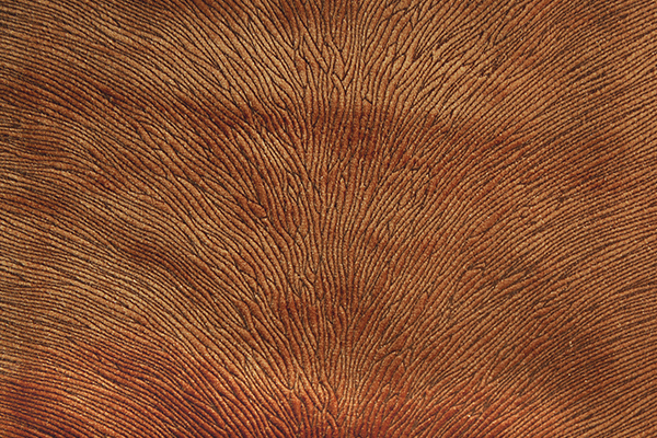 HIDE VELVET RUST Fabric by KOKET