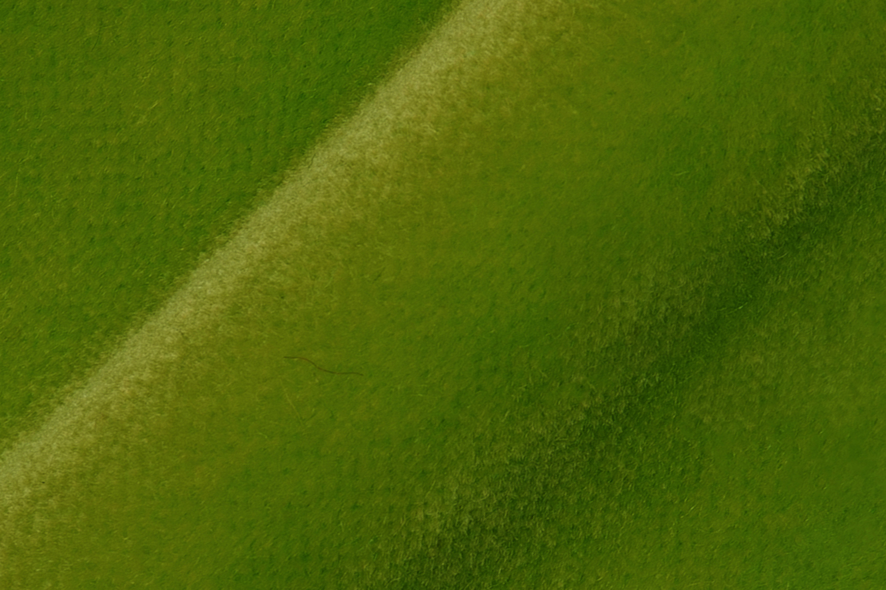 LUX VELVET 0775 BRIGHT GREEN Fabric by KOKET