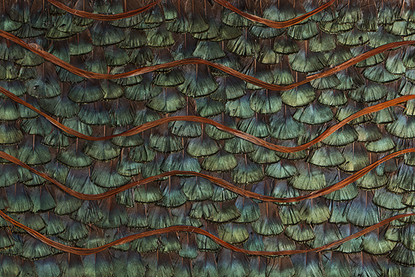 PEACOCK ORGANIC FEATHERS Wallcovering by KOKET