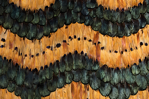 PEACOCK PHEASANT CARAMEL FEATHERS Wallcovering by KOKET